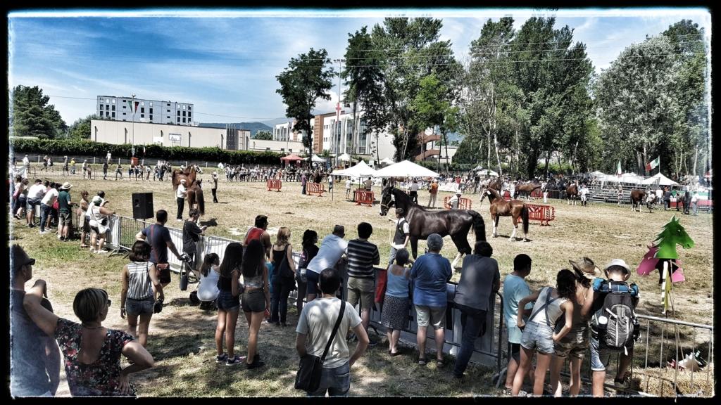 Valutazione dell'edizione San Savino 2018 a cura dell'Associazione Festa e Fiera